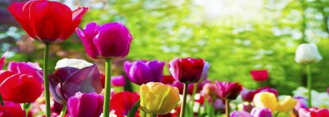 photo of colourful flowers
